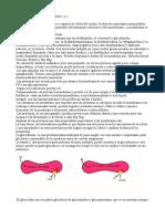 Biologia celular e Histología - Esther Fdez.pdf