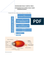 Temario Funcionalidad Visual y Auditiva (Autoguardado)