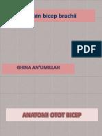 Strain Bicep Brachii