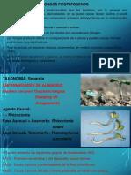 Hongos Fitopatogenos (i)