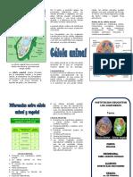 triptico celula animal y vegetal.docx