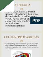 Celula y Tejidos