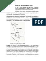 anatomía de los tallos y yemas de la vid