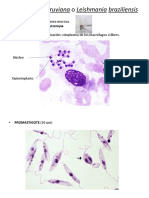Trypanosoma, Amebas, Leishmania y Plasmodium