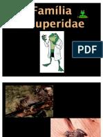 1. Familia Leiuperidae
