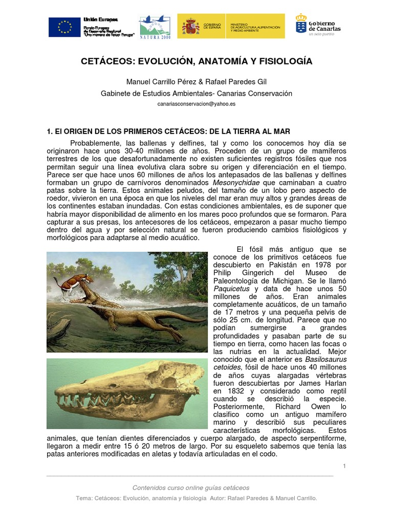 Cetáceos- Evolucion, anatomía y fisiología.pdf