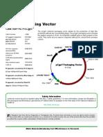 pCgpv Vector