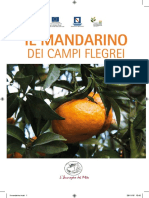 Mandarino Campi Flegrei