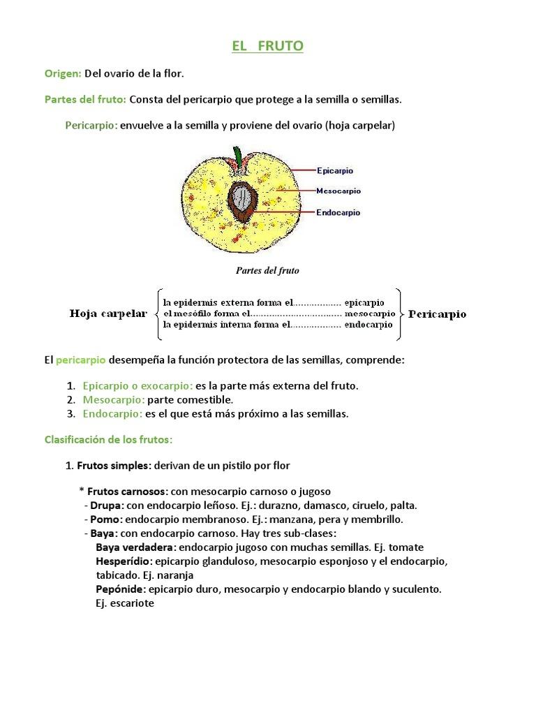 Excelente Manzana Pericarpio Imágenes - Anatomía de Las Imágenesdel ...