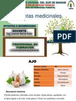 10-plantas-medicinales