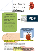 Fast Facts About Our Kidneys