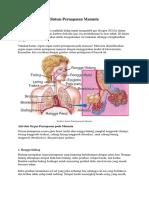 6 Organ Sistem Pencernaan Manusia Lengkap