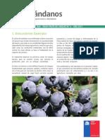 06. Pauta de chequeo Arandanos.pdf