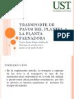 6.PAVOS.pptx