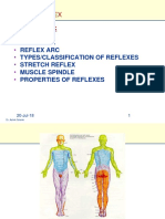 11 Feb Lect. Reflexes