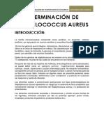Informe de Staphylococcus Aureus