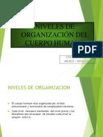 NIVELES DE ORGANIZACION.ppt