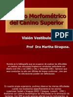 Estudio Morfométrico Del Canino Superior