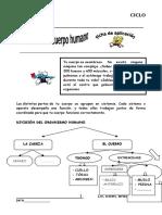 CAURO EL CUERP HUMAN.doc