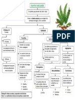 Mapa plantas vasculares