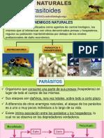 6. Parasitoides.pptx