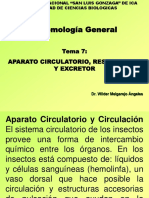 APARATO_CIRCULATORIO insectos