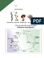 Ciclo biológico de Hongos..docx