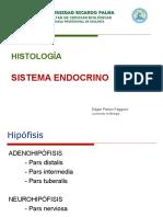 12 Sintema Endocrino (1)