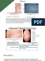 Pankreas & Adrenal