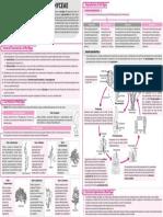 Concept Map – Biology – 2018 – June