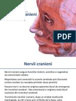 Nervii Cranieni I-V Versiune 97