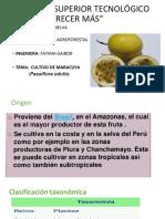 Presentación- -maracuya-..-fitop-1.pptx