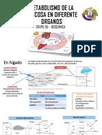 Metabolismo de La Glucosa en Diferente Organos