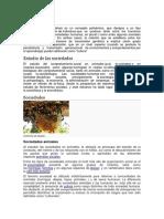SOCIEDAD CONCEPTOS B.docx