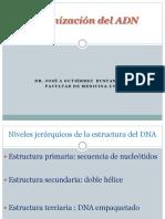 Organización Del ADN