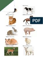10 Animales Con Su Nobre Cientific