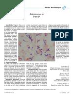 Enterococos 1.pdf