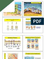 Notas de Clase Fisioanatomía Cardiovascular y Del SNC MF Guerrero (1)