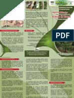 Algunos Métodos de Propagación Del Cultivo de Cacao