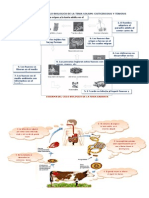 Esquema Del Ciclo Biologico de La Tenia Solium.doc Imprimir3