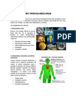 0enfermedades_vesiculobulosas-patatabrava