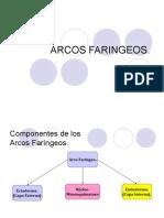 ARCOS FARINGEOS