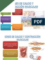 IONES DE CALCIO Y CONTRACCIÓN MUSCULAR
