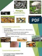 Hongos, Caracteristicas Generales,Principales Grupos,Liquenes