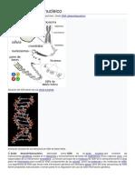 Acido desoxirribunocleico