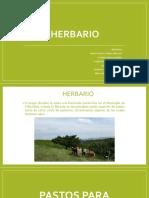 5 HERBARIO2