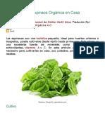 Cómo Cultivar Espinaca Orgánica en Casa.docx