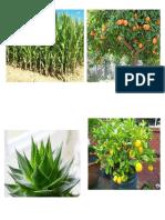 arboles de frutas.docx
