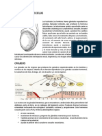 FISIOLOGIA.docx