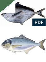 peces mar peruano